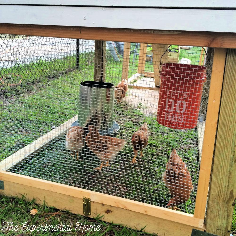 chicken coop waterer and feeders