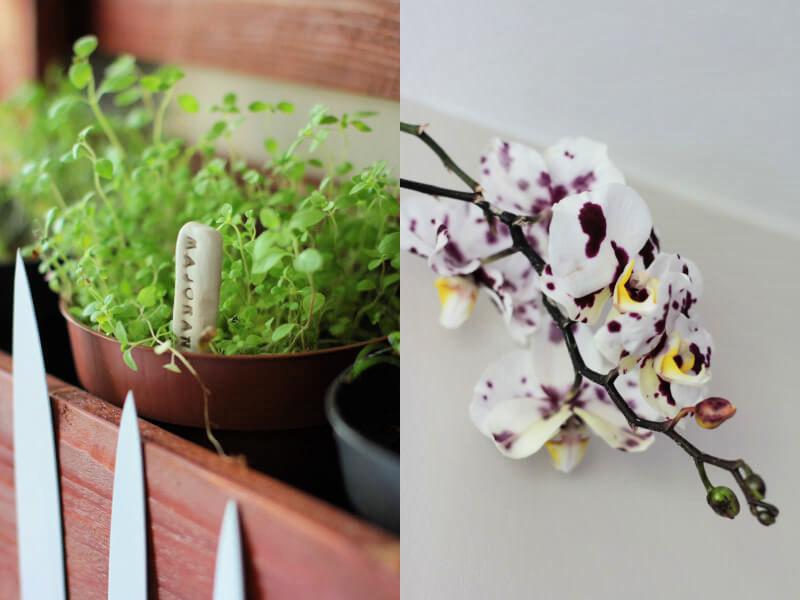 Pallet shelf herbs flowers
